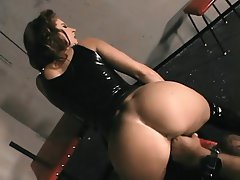 Anal BDSM Blowjob Big Boobs Brunette